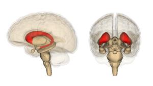 大脳基底核14